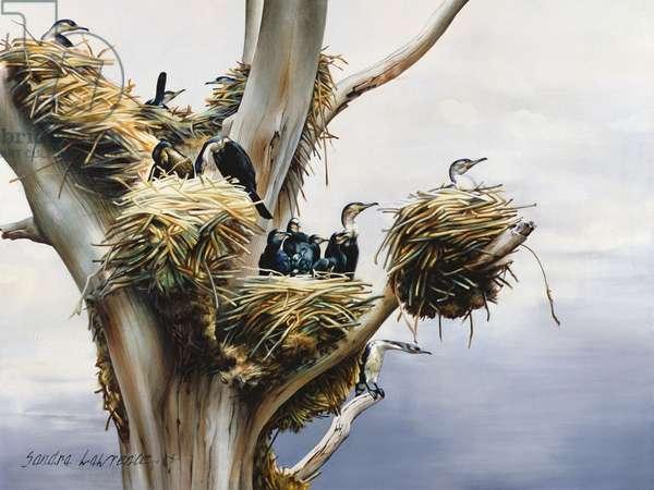 Cormorants- Lake Naivasha, 1984 (oil on canvas)