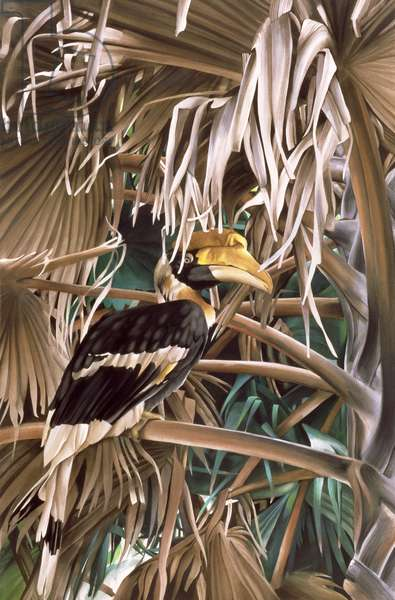 Hornbill, 1987 (w/c and acrylic on paper)