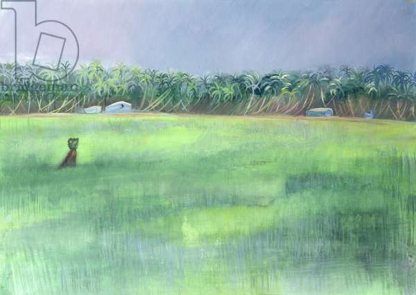 Rice Fields, Goa, India, 1997 (oil on paper)
