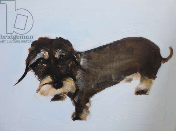Wire-haired Dachshund 2014 (oil on board)
