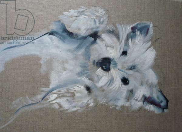 West Highland Terrier 2013 (oil on canvas)