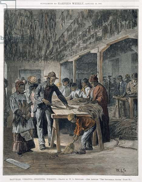 Stripping tobacco, Danville, 1883 (coloured engraving)