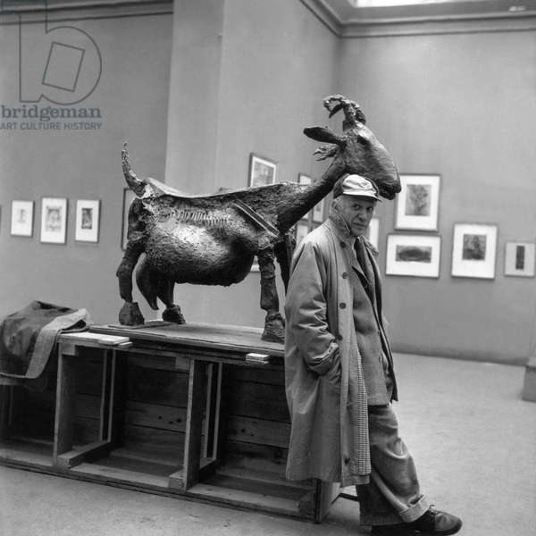 Pablo Picasso posing near one of his sculptures, 'The Goat, 1950' (b/w photo)