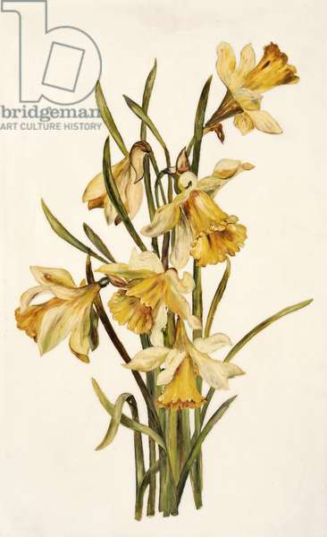 Still Life, Daffodils (oil on opal glass)