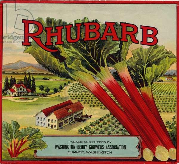 Rhubarb, Packed and Shipped by Washington Berry Growers Association, Sumner, Washington (colour litho)
