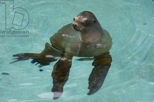 Sea lion (photo)