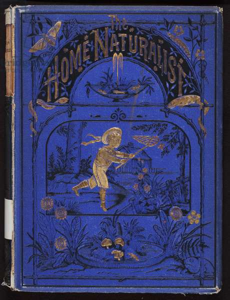 The Home Naturalist by Harland Coultas, London: Religious Tract Society, 1870s (book with stamped cloth cover)