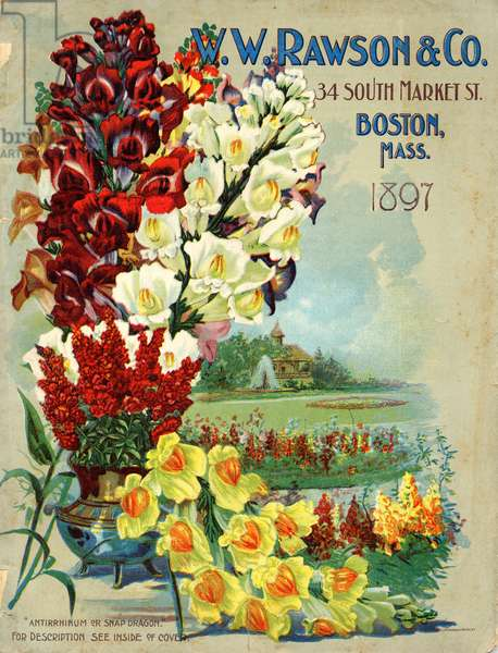 Cover of a seed packet, W.W. Rawson & Co, Boston, Massachusetts, 1897 (colour litho)