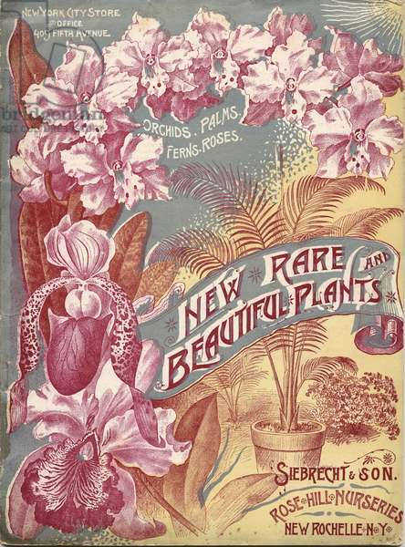 New, Rare and Beautiful Plants, Siebrecht & Son, New York, 1890s (colour litho)