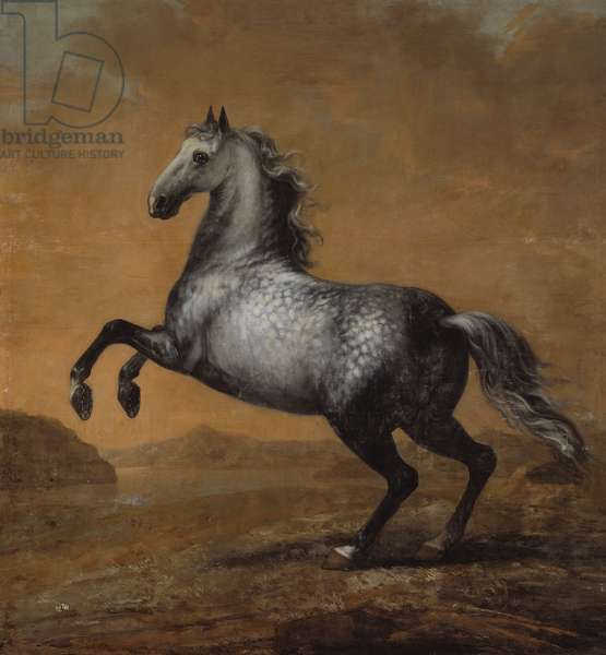 The Little Englishman, King Karl XI (1655-97)'s  Horse (oil on canvas)
