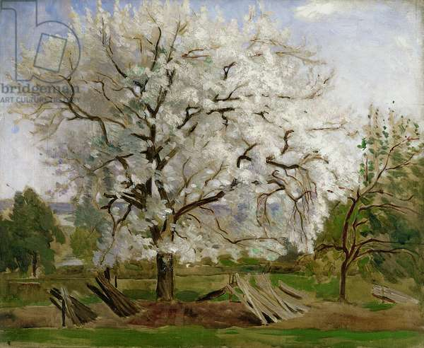 Apple Tree in Blossom (oil on canvas)
