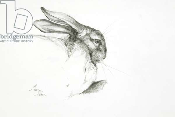 Study of a Rabbit, 2005 (pencil on paper)