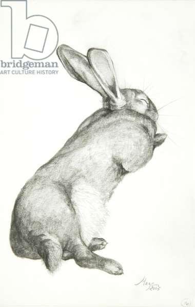 Rabbit Sleeping, 2005 (pencil on paper)