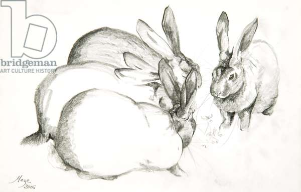 Rabbits, 2005 (pencil on paper)