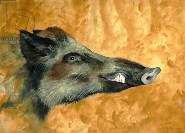 Charentais Boar (gouache on paper)