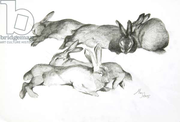 Rabbits Sleeping, 2005 (pencil on paper)