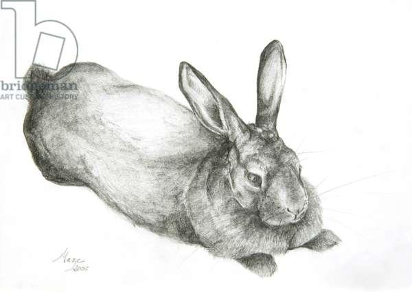 Rabbit, 2005 (pencil on paper)