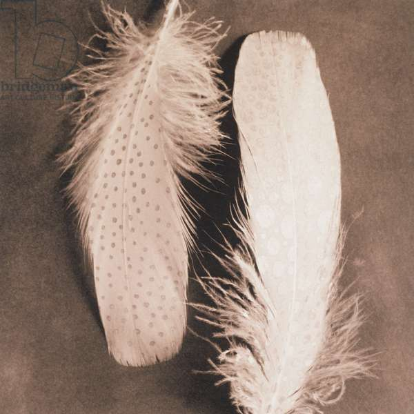 Two bird feathers