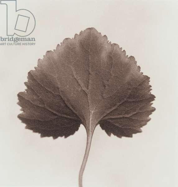 Single leaf on white background,