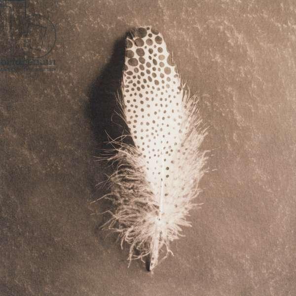 Single bird feather