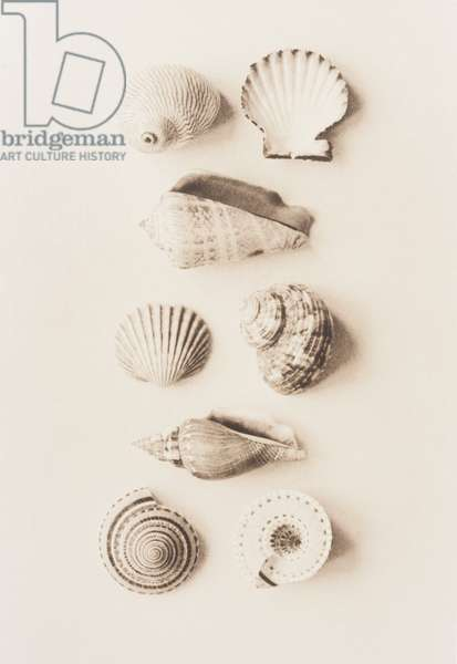 Composition of different sea shells