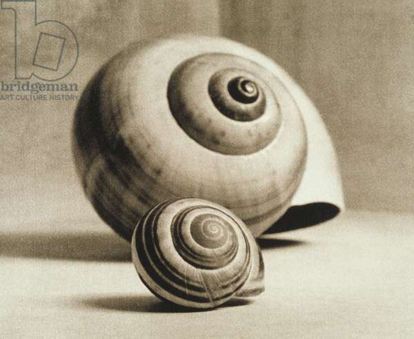 Two snail shells