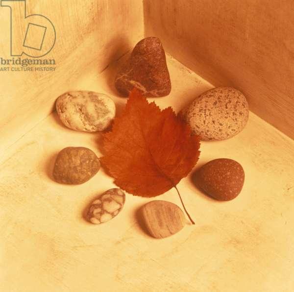 Rocks and Leaf in Corner
