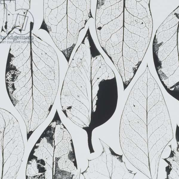 Composition of dried leaves
