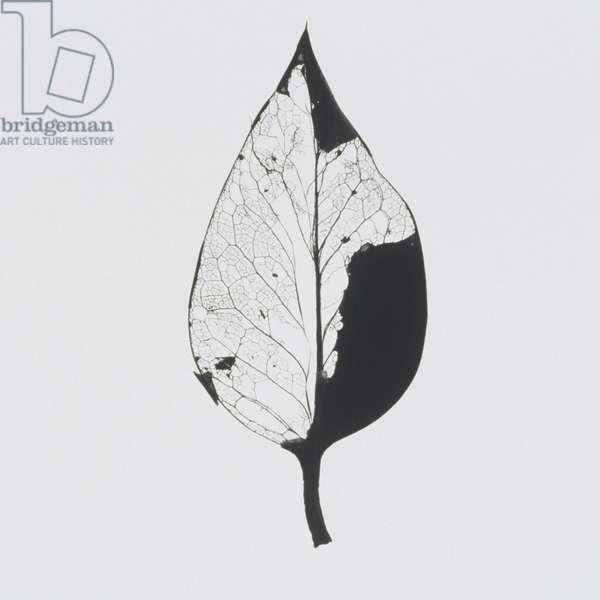 Single dried leaf