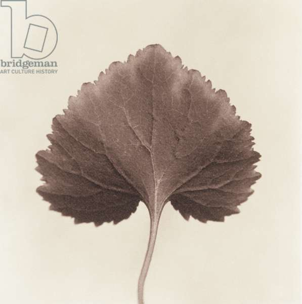 Single leaf on white background
