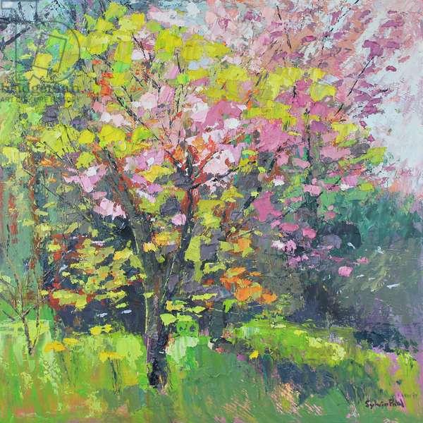 Blossom Delight