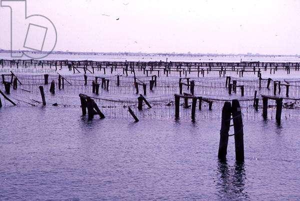 Fishing nets in the Lagoon (photo)