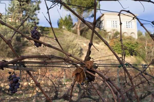 Via Salceda vineyards in Cenicero La Rioja Spain, 2018 (photo)