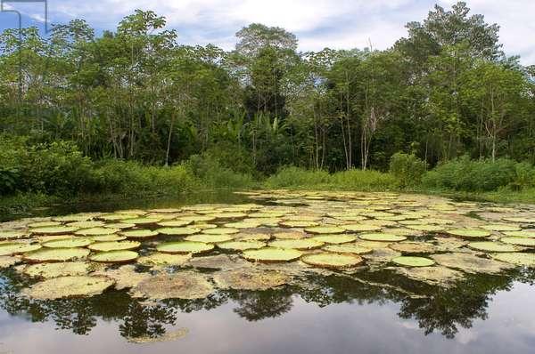 Amazon, Peru (photo)