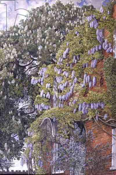 Wisteria at Englefield, 1954 (oil on canvas)