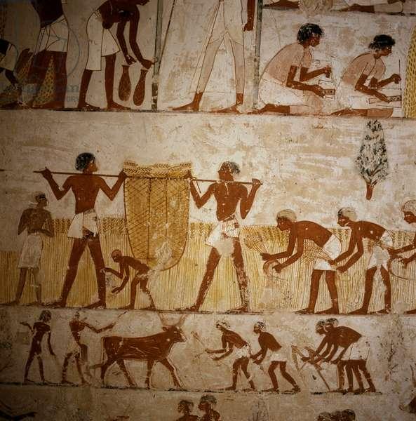 Menena Tomb: Harvesting Scene #3 Egyptian Art Valley of the Kings, Thebes