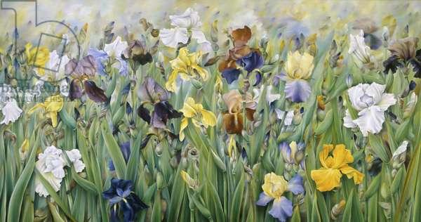 The Irises of Guemappe 1993 Heliette Wzgarda (b.1943/French) Oil The Grand Design, Leeds, England