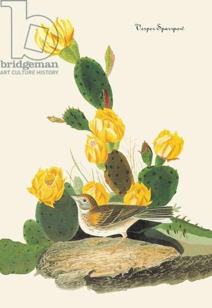 Vesper Sparrow (drawing)