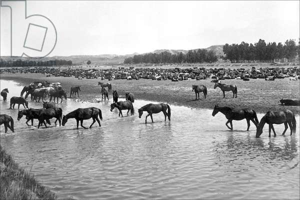 Horses crossing the river at Round-up Camp, Classic Photography