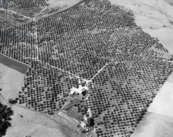 Aerial view of an apple orchard