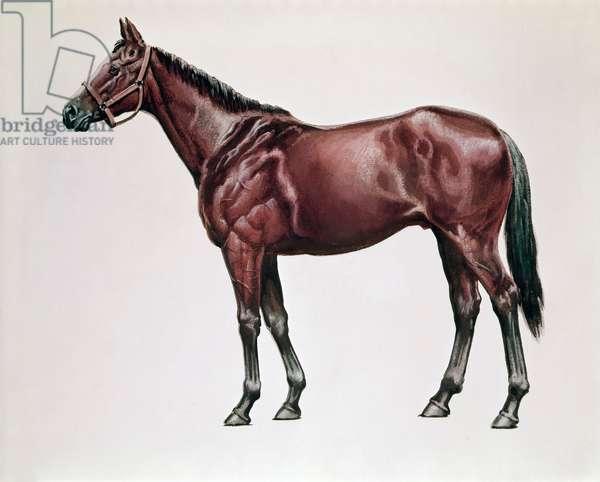 Horses Artist Unknown