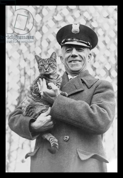 Tige the White House Cat - Safe and Sound, Classic Photography