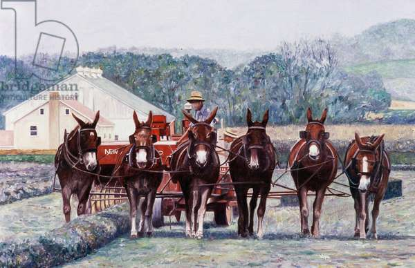 Harvest, Amish Mules, PA. 2000 Anthony Butera (b.20th C.) Oil