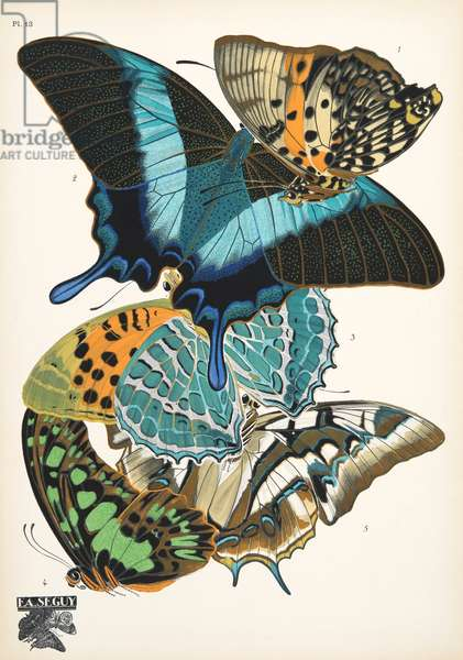 Plate 13, from Papillons, pub. 1925 (pochoir print)