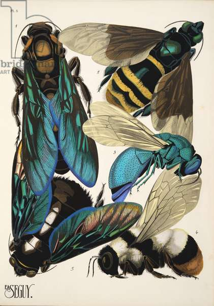 Plate 5 from Insectes, pub. 1930's (pochoir print)