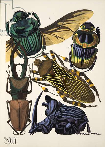 Plate 15 from Insectes, pub. 1930's (pochoir print)