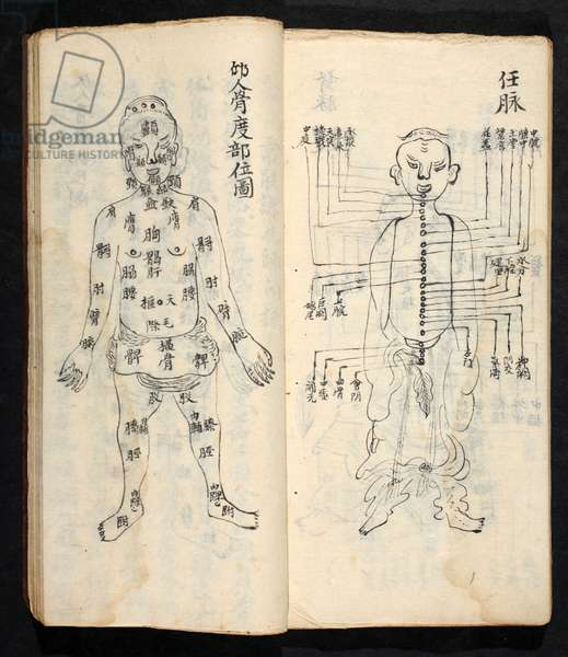 Acupuncture points along the central line of the body, from Jing Guan Qi Zhi, 'The beginnings and ends of acupuncture points and channels', pub. Southern China, early 18th century (ink on paper)