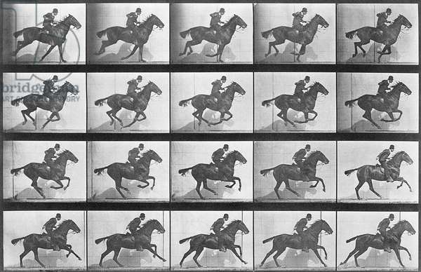 Galloping Horse, plate 628 from 'Animal Locomotion', 1887 (b/w photo)