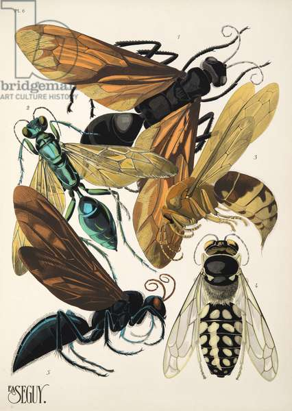 Plate 6 from Insectes, pub. 1930's (pochoir print)