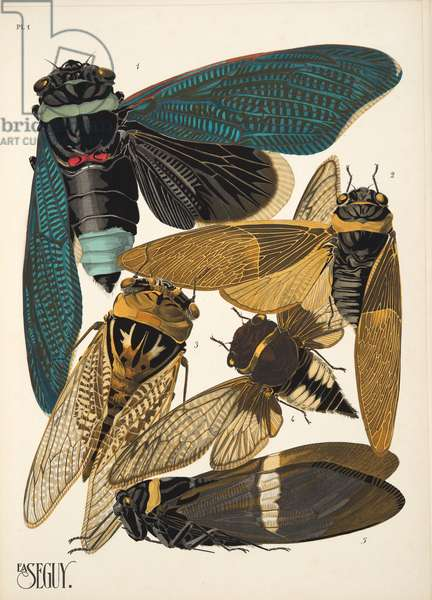 Plate 1 from Insectes, pub. 1930's (pochoir print)